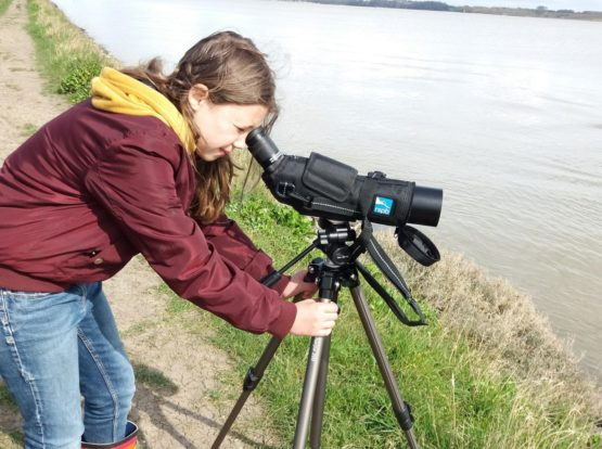 A volunteer filming Redshank on the River Stour