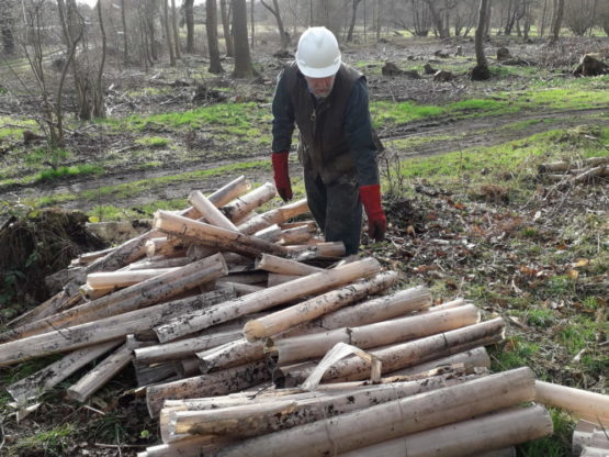 Man by pile of logs