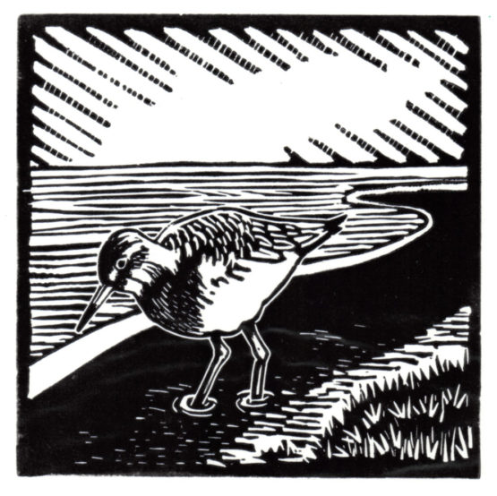 An image showing an illustration of a Redshank bird used for the National Landscape Award
