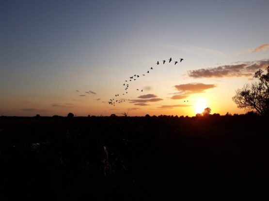 A sunset on the horizon with birds in the foreground