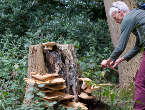 A man photographing mushrooms in a wooded area