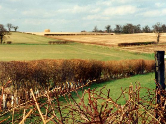 View of fields and hedges